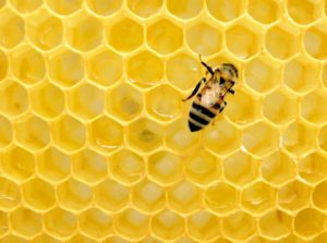 une abeille sur des alveoles vides